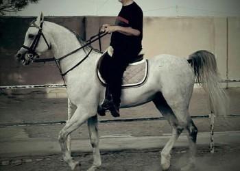 مرکز پرورش اسب سنگسو(معینی)