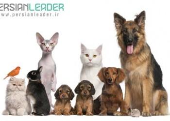 کلینیک اختصاصی حیوانات خانگی آرا