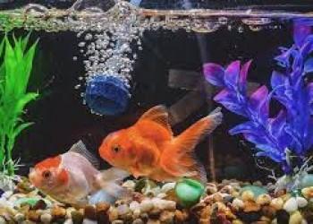 معرفی بهترین فروشندگان ماهی های زنتی و آکواریوم در استان البرز کرج