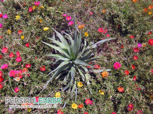 گل و گیاه